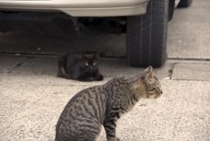 黒とグレイの猫(暖色フィルタ)