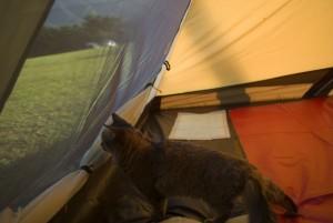 外の様子を窺う猫