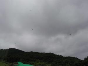 パラグライダーとトンボ