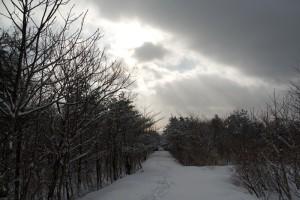 歩いた道に差し込む光