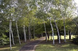 大平山リゾート高原の並木道