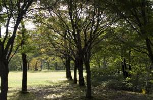大平山リゾート高原の広場
