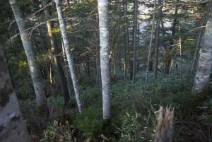 静謐な森林