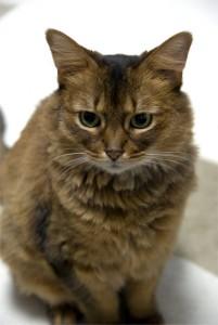 猫神様に昇格した猫