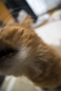 顔をこすり付ける猫