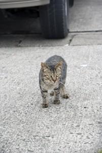 グレイの猫