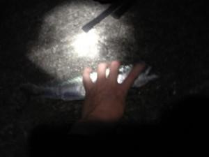 地面に押さえられ、ナイフを振りかざされる鯖