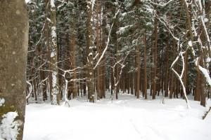 鬱蒼とした森