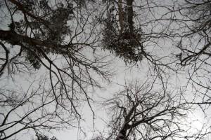 森から見上げた空