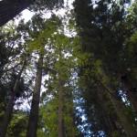 背の高い木