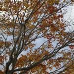 御所湖の紅葉1