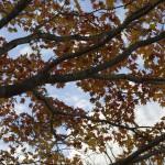 御所湖の紅葉2