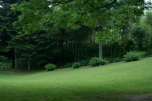 緑鮮やかな竹林